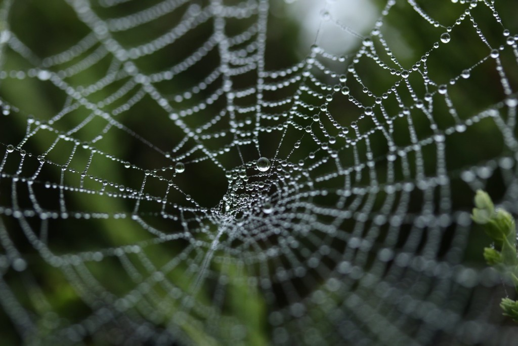Image of a Spider web